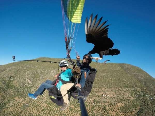Parahawking Experience tandem flight