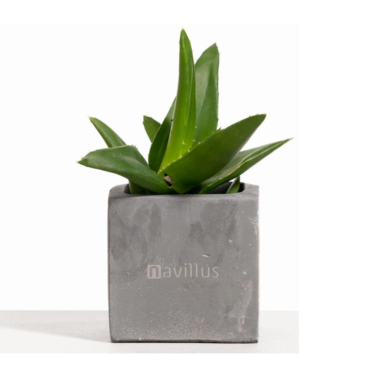 Desk Plant with Graphite Clay Pot