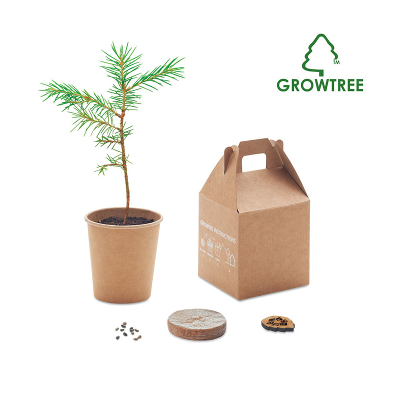 Promotional Living Pine Trees