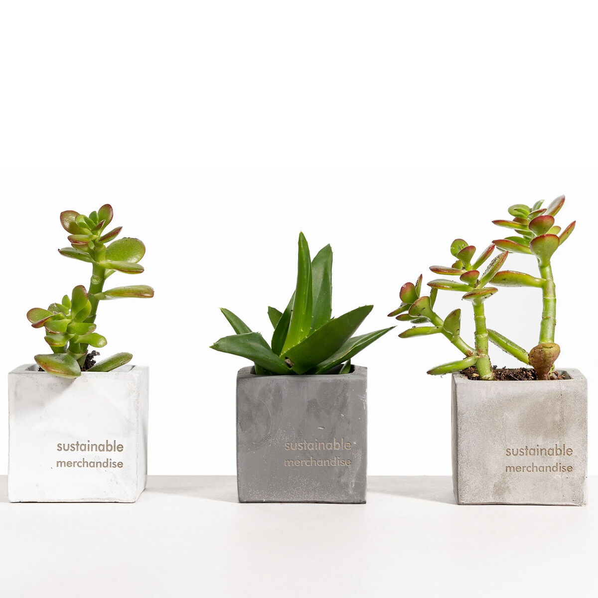Desk Plants with Clay Pots