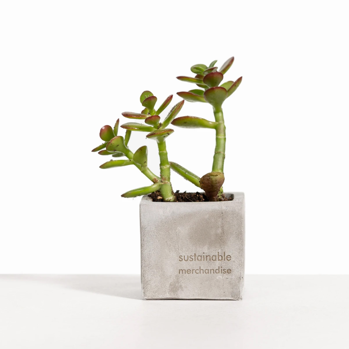 Desk Plant with Grey Clay Pot