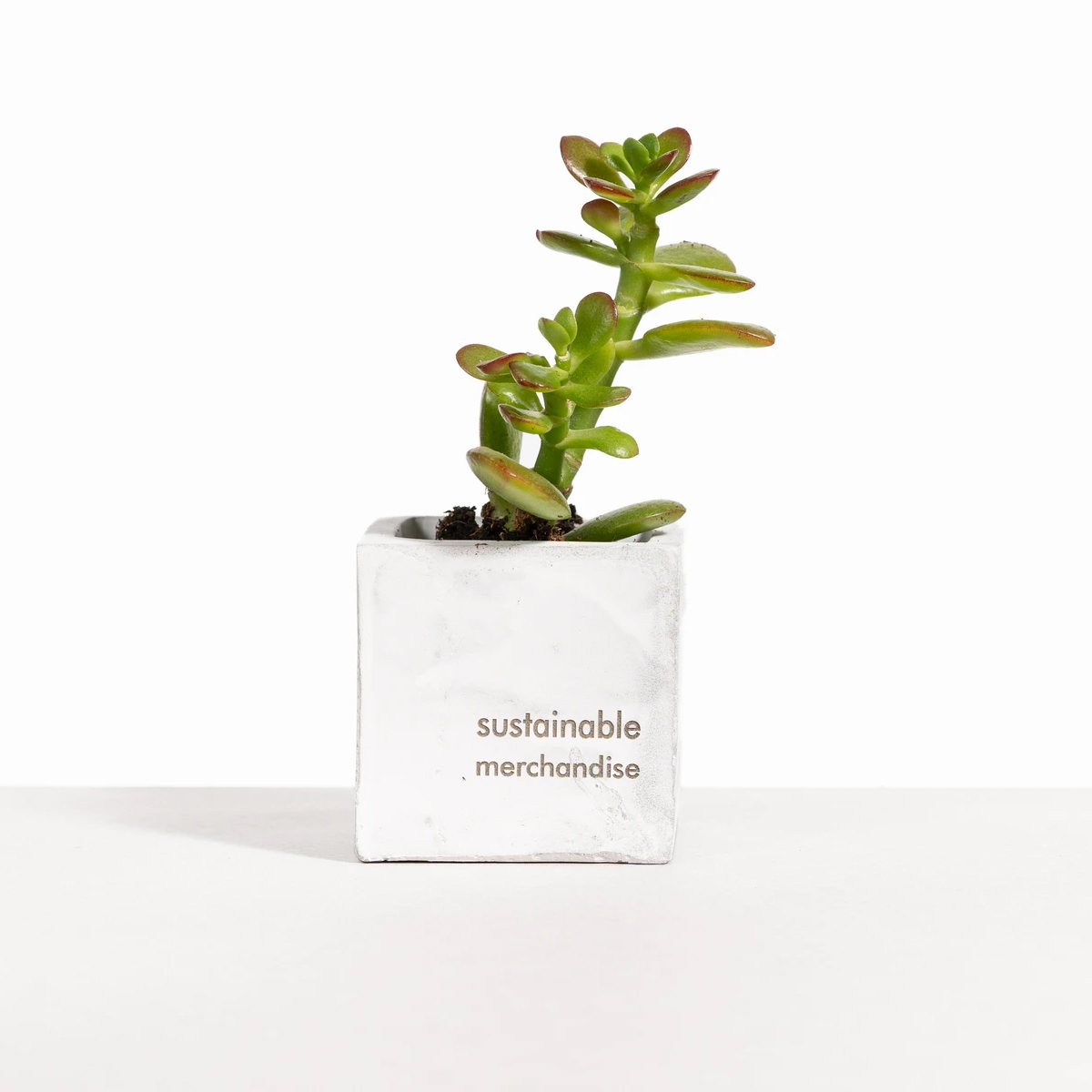 Desk Plant with Marble Clay Pot