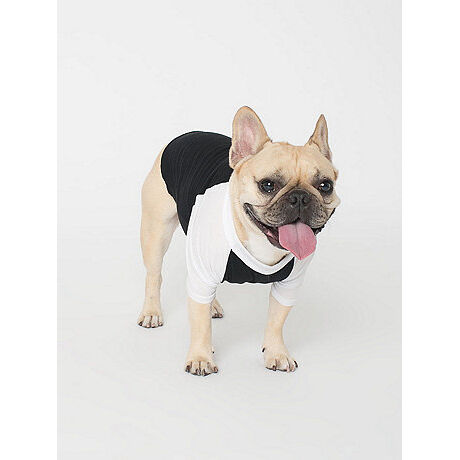 T Shirts for Dogs - Black
